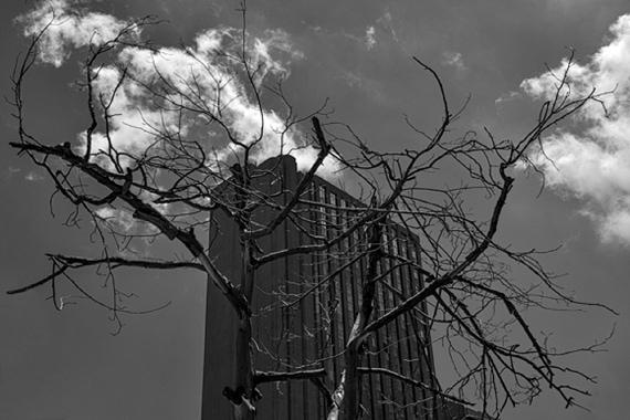 Concrete Jungle by Roger Crichton