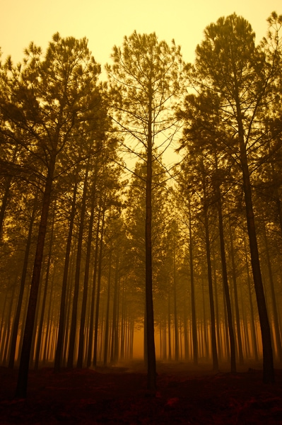 Surreal Forest Photograph